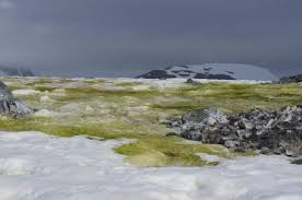 why is antarctic ice turning green?